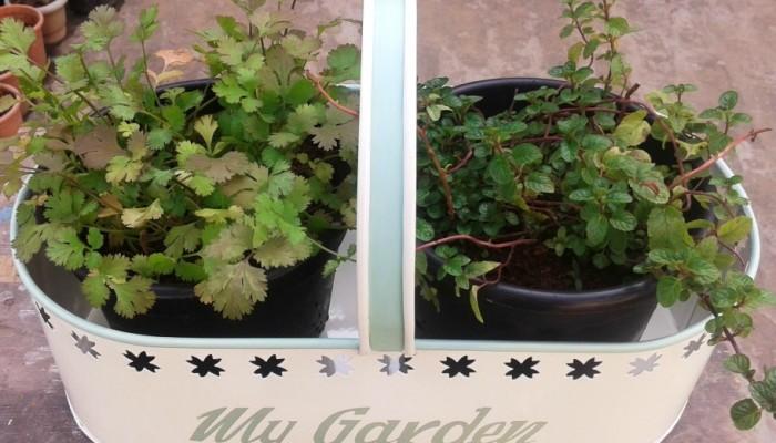 Create a Herb Corner